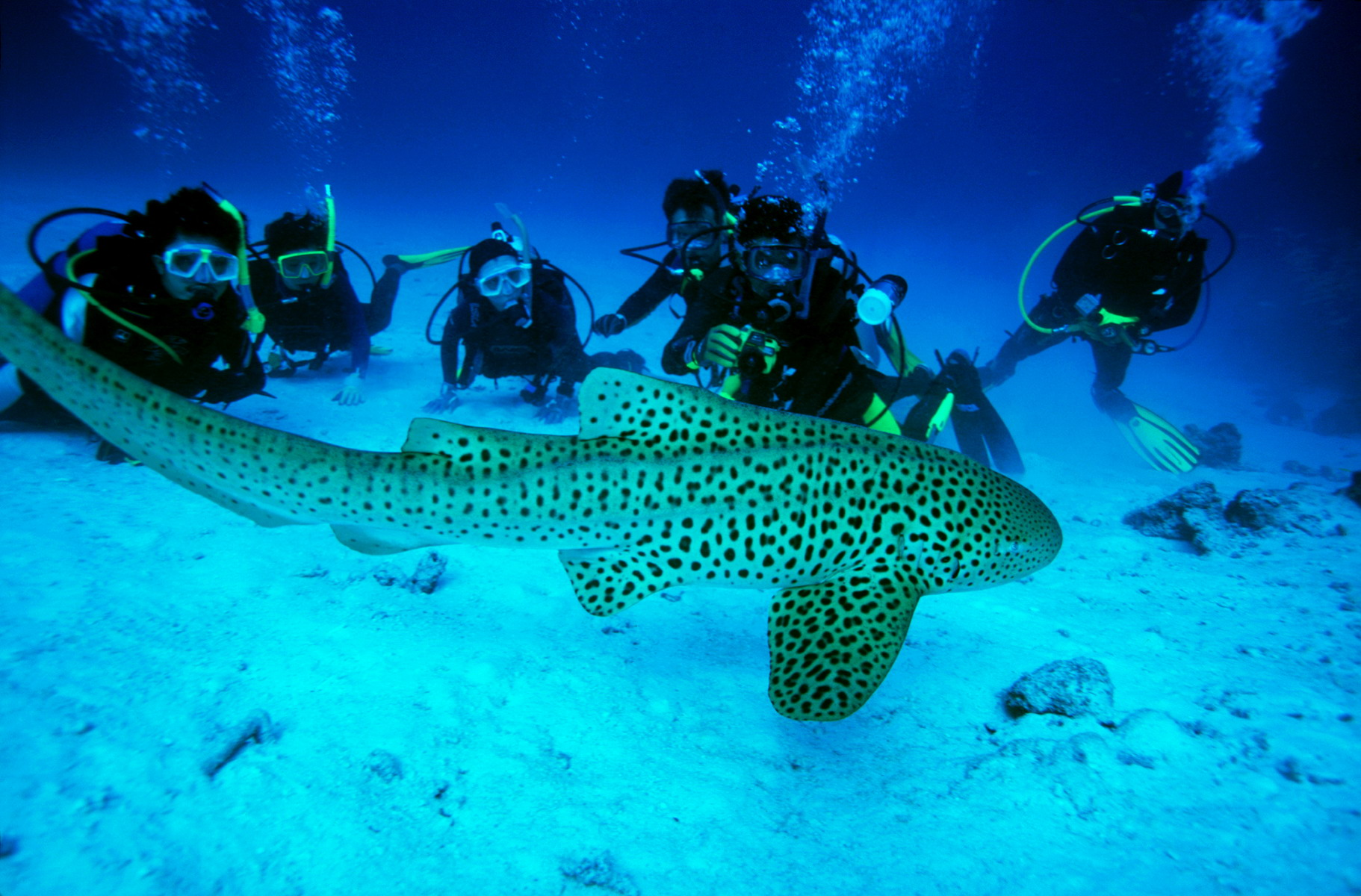 Amazing andaman inspire holidays resorts private limited - Where to dive in thailand ...